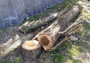 V Modřanech se budou kácet stromy, překážejí dělníkům v práci. Nahradit jich lze jen 11