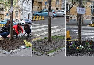 Spolek Street Gardening společně s místními občany vytváří krásné malé zahrádky uprostřed ulic. Tato vznikla ve středu v Kubelíkově ulici na Žižkově