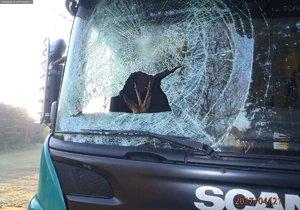 Kamion srazil srnce, ten zůstal zraněný v kabině vozu!