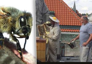 Na několika střechách v Praze žijí včely.