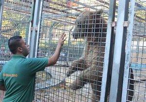 Medvěd urval v zoo chlapci (9) ruku a sežral ji před jeho spolužáky