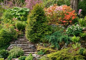 V Prokopském údolí se otevře skalničková zahrada (ilustrační foto)