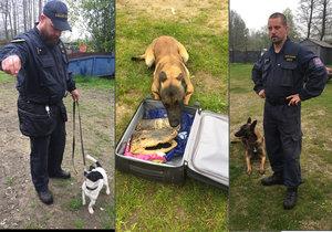 Psi z Heřmanic umí vyčenichat drogy, alkohol, zbraně i pašovaná zvířata.