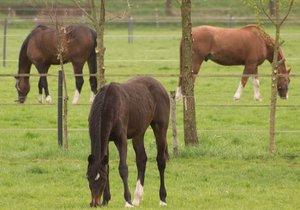 Cizí lidé zabili koně v Netlukách u Uhříněvsi: Nasypali mu trávu ze sekačky