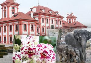 Pražská Troja: Tři v jednom! Navštivte zoo, zámek i botanickou zahradu.