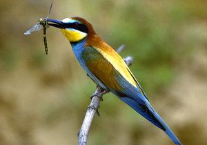 Vlhám ucpali hnízda na Hodonínsku montážní pěnou: Letos mají ptáci speciální stěnu