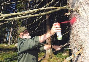 V Česku je stále spousta dřeva napadená kůrovcem.
