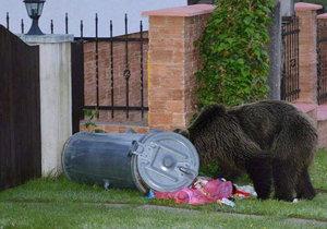 Medvědice teď bloudí městem.