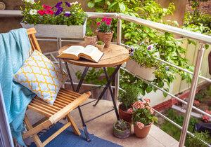 Balkonovky potřebují pravidelnou zálivku a vzdušný substrát.