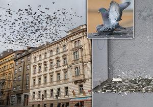 Holubi v Praze mohou podle odborníků přenášet nemoci, lidé by měli být opatrní.