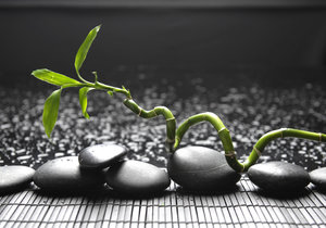 Lucky Bamboo můžete pěstovat ve vodě, hydrogelu, i v substrátu.