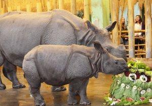 Křtiny nosorožčího mláděte Růženky v plzeňské zoo