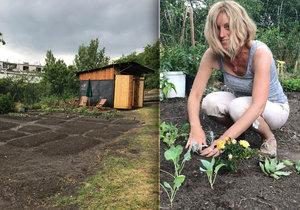 Renata na Kotlasce pěstuje astry, kedlubny i sukulenty.