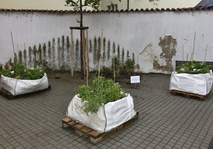 V centru Prahy vznikla nová komunitní zahrádka, fungovat bude do konce sezony.