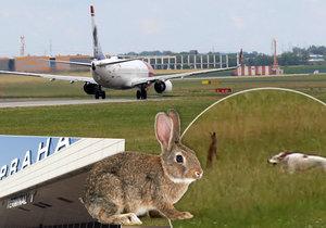 Na letišti zasahovali cvičení psi.
