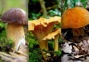 Stačí vědět, která houba si rozumí s kterým druhem stromu a máte z části vyhráno.
