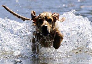 V horku v ideálním  případě nechte psy, aby se ochladili sami.