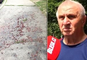 V Jablonecké ulici na Proseku chodcům překáží popadané plody stromu, úklid tu neprobíhá.