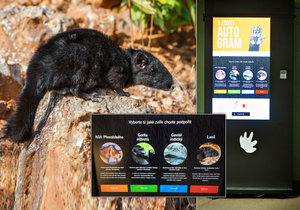 V areálu Zoo Praha jsou nové terminály. Pomáhat skrz ně můžete i hlodavci, kterému se říká laoš.