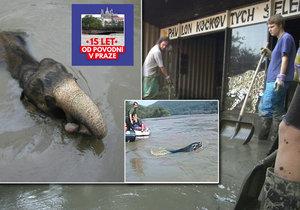 Povodeň roku 2002 drtivě zasáhla také Zoo Praha.