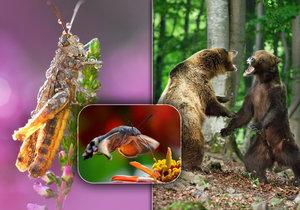 Unikátní výstava ukazuje zvířecí říši!