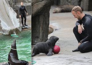 S obecenstvem v Zoo Praha se rozloučil lachtan Mamut, představil se jeho mladší bráška.