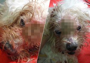 Otřesný případ: Psa zaživa žrali červi, někdo ho odložil u domova důchodců