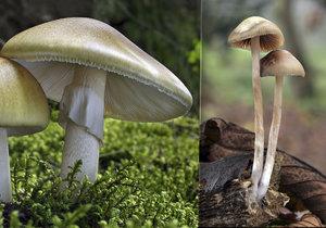 Pozor na jedovaté houby
