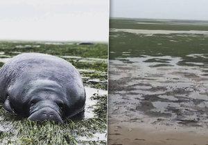 Hurikán Irma vysál vodu z oceánu na Floridě a uvěznil kapustňáky.