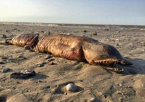 Moře vyvrhlo po hurikánu na pláž u Texas City děsivou příšeru.