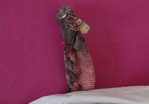 Toto je domnělý ještěr. Ve skutečnosti šlo o starou ponožku.