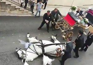 Kůň padl na zem vyčerpáním.