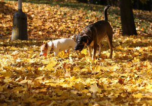 Do Česka definitivně přijde podzim