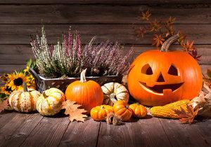 Vydlabané dýně jsou nejznámějším symbolem Halloweenu. Co nejstrašidelnější obličej na dýni má odhánět zlé duchy.