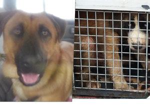 Tyranka zavřela psy do auta: Tři dny tam byli o hladu a žízni mezi výkaly