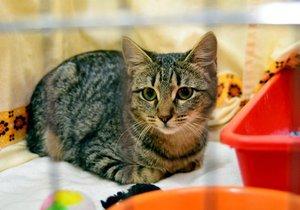 Dejte domov kočičímu bezdomovci: Nového mazlíčka si můžete vybrat na umísťovací výstavě v Praze 3