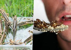 Je libo hmyz k jídlu? Od ledna bude možné je v Česku jíst legálně.