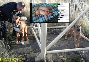 Muž z Chomutova se chtěl zbavit svých psů: Lidé ho vypátrali přes sociální sítě.