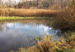 Kvalita vody v Praze se dlouhodobě zlepšuje. (Ilustrační foto)