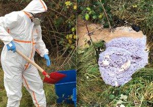 Pejskaři, pozor v Cholupicích: Ve volné přírodě se našly desítky kilogramů chemikálií