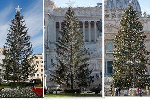 Řím má problém s vánočním stromem, rychle mu padá jehličí.