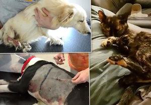 Dojemné video ochránců zvířat: Těmto pejskům jsme letos pomohli, pomozte i vy, vyzývají.