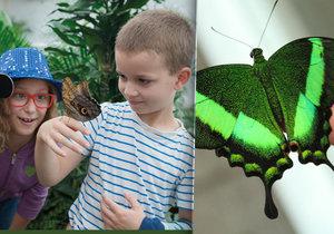 Motýlí dům Diana v Karlových Varech