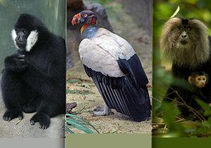 Ostravská zoo chystá nové výběhy. Dočká se gibon bělolící, kondor královský i makak lví.