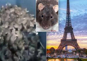 Paříž se potýká s epidemií potkanů.