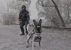 Služební pes Connor vypátral zlodějku během deseti vteřin.