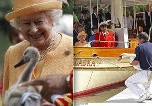 Královna Alžběta je smutná kvůli smrti labutí.