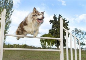 V Plzni vznikne nový park: Speciální hřiště na zlepšení kondice tu budou mít psi