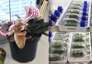 Laboratoř botanické zahrady v Praze pomáhá přežít vzácným rostlinám.