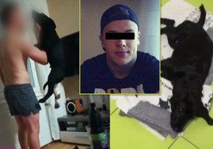 Komplikace u týraného Marleyho: Další operace a hrozící trvalé následky!